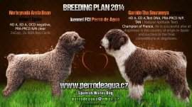 Areta + Garrido breeding plan