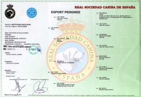 Areta export pedigree